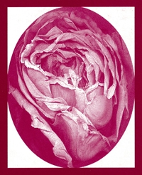 Photo of a rose in an oval frame circumscribed by a rectangular frame.